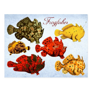 Frogfishes Postcard