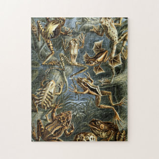 Frogs by Ernst Haeckel Jigsaw Puzzle