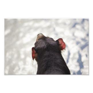 From Behind a Tasmanian Devil Photo Print