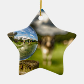 From Grass To Glass Ceramic Star Ornament