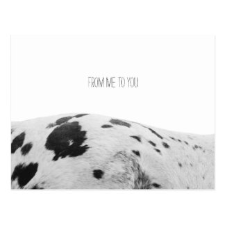 From Me To You Appaloosa Postcard