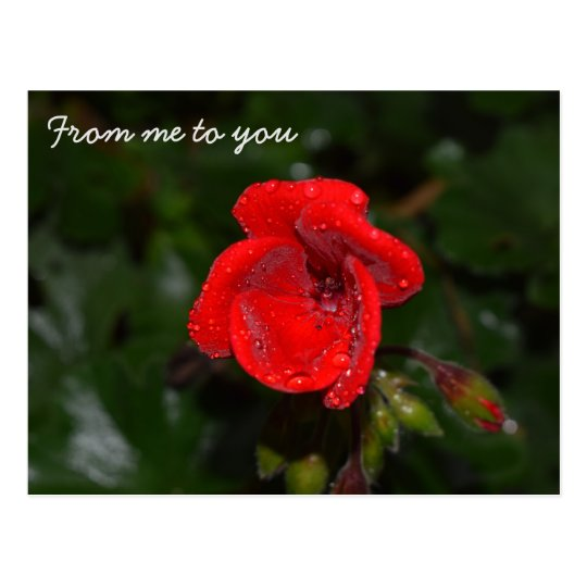 From me to you, postcard