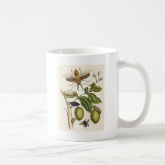 from Metamorphosis insectorum Surinamensium, Plate Coffee Mug