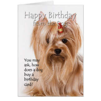 From the Yorkie Card