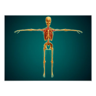 Front View Of Human Skeleton With Nervous Poster