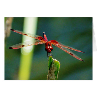 Frontal Red and Black Dragonfly Greeting Card