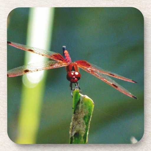 Frontal Red and Black Dragonfly Drink Coasters