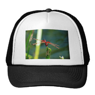 Frontal Red and Black Dragonfly Mesh Hat