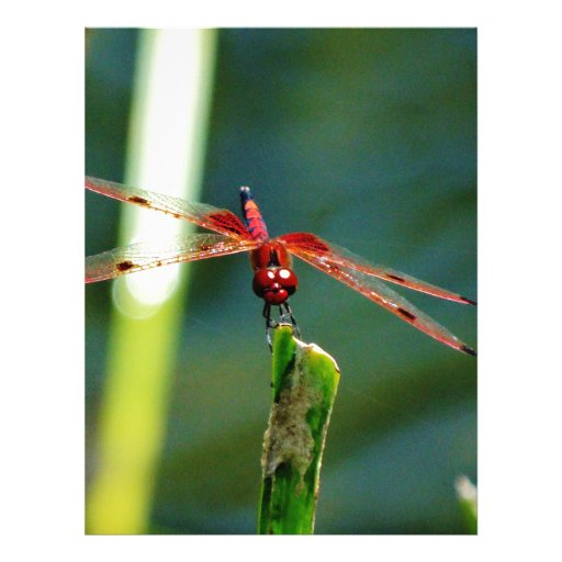 Frontal Red and Black Dragonfly Letterhead Template