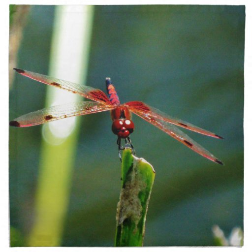 Frontal Red and Black Dragonfly Printed Napkin