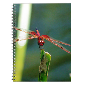 Frontal Red and Black Dragonfly Spiral Notebooks