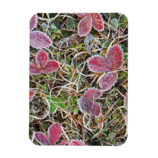 Frost covered leaves, Canada Rectangular Photo Magnet