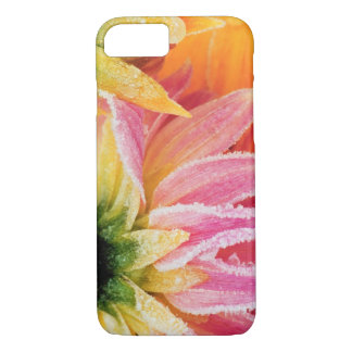 Frost on the last blooms of the fall - Dalhia - iPhone 7 Case