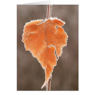 Frosted Birch Leaf at Bog Card