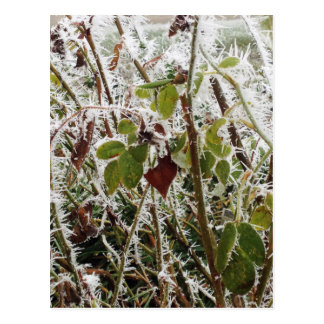 frosted leaves postcard