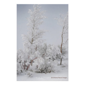 Frosted Tree Mono Lake CA Poster