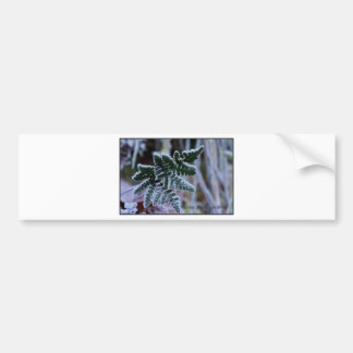 Frosty Fern Bumper Sticker