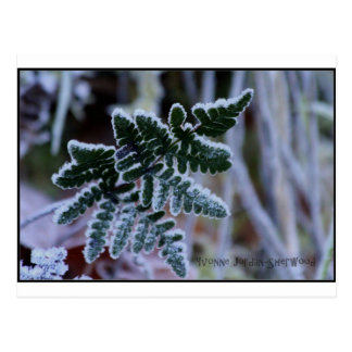 Frosty Fern Postcard