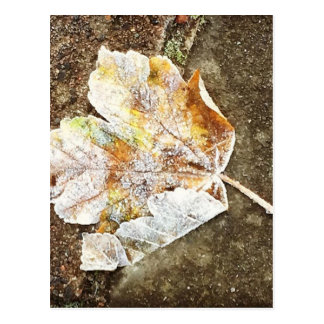 Frosty Leaf Postcard