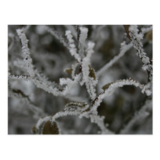 Frosty Miracles Postcard
