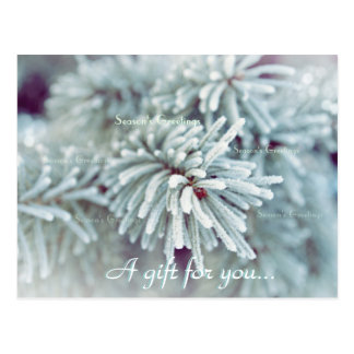 Frosty Pine Bough Holiday Gift Certificate Postcard