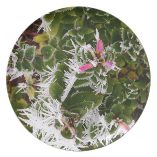 frosty pink plate