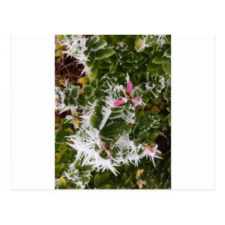frosty pink postcard