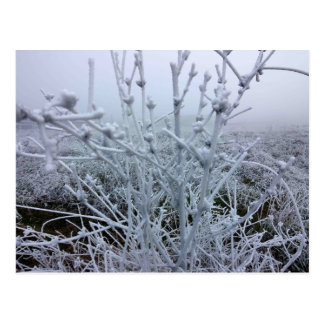 Frosty Plants Winter Landscape Postcard