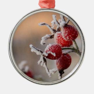 Frosty rose hips in sunlight metal ornament