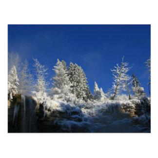 Frosty Winter Morning Postcard