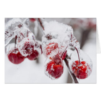 Frozen crab apples on snowy branch card