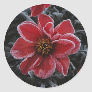 Frozen Dahlia 64 ~ sticker