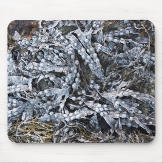 Frozen seaweed mouse pad