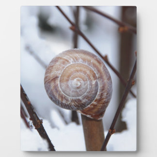 Frozen Snail Shell in Snow Plaques