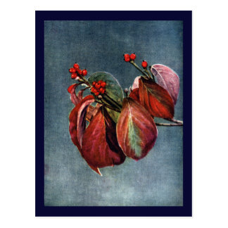 Fruit and Autumn Leaves of Flowering Dogwood Postcard