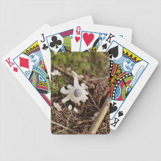 Fruit body of a rayed earthstar (Geastrum quadrifi Bicycle Playing Cards
