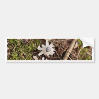 Fruit body of a rayed earthstar (Geastrum quadrifi Bumper Sticker