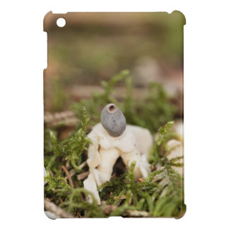 Fruit body of a rayed earthstar (Geastrum quadrifi iPad Mini Case