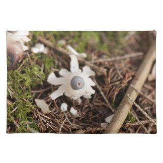 Fruit body of a rayed earthstar (Geastrum quadrifi Placemat