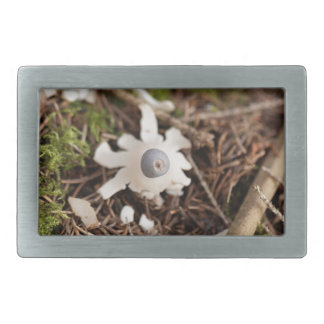 Fruit body of a rayed earthstar (Geastrum quadrifi Rectangular Belt Buckle
