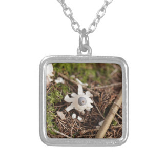 Fruit body of a rayed earthstar (Geastrum quadrifi Silver Plated Necklace