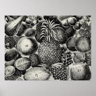 Fruit Chart Black & White Fruity Antique Inspired Poster