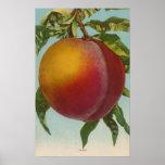 Fruit Chromo Lithograph of PeachFruitState Print