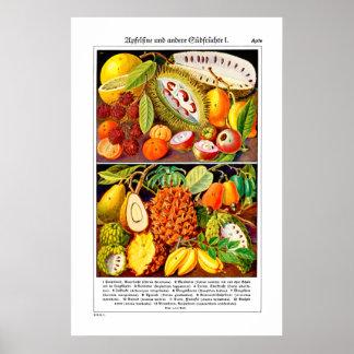 Fruit Illustrated Guide 1937 - Poster Semi Gloss