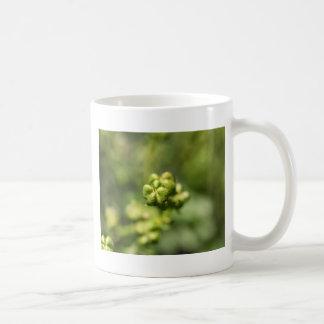 Fruit of a common rue (Ruta graveolens) Coffee Mug