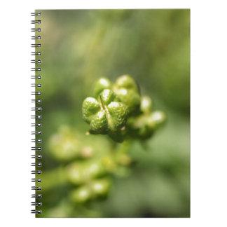 Fruit of a common rue (Ruta graveolens) Notebook