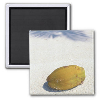 Fruit of Palm Magnet