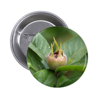 Fruit of the common medlar 2 inch round button