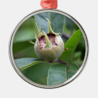Fruit of the common medlar metal ornament