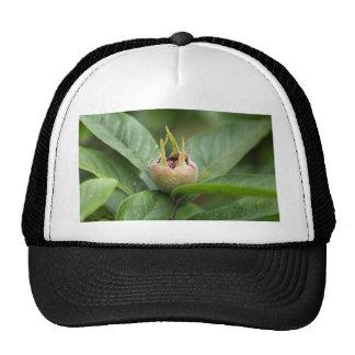 Fruit of the common medlar trucker hat